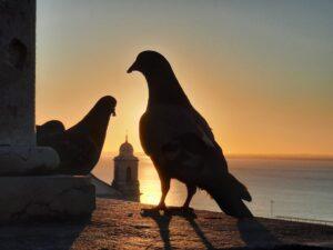 Powitanie słońca, Lizbona 2020/ cumprimentando o sol, Lisboa 2020